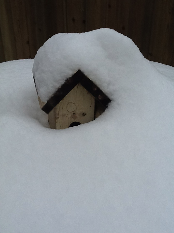 It's warmed up so much, the birdhouse is visible again