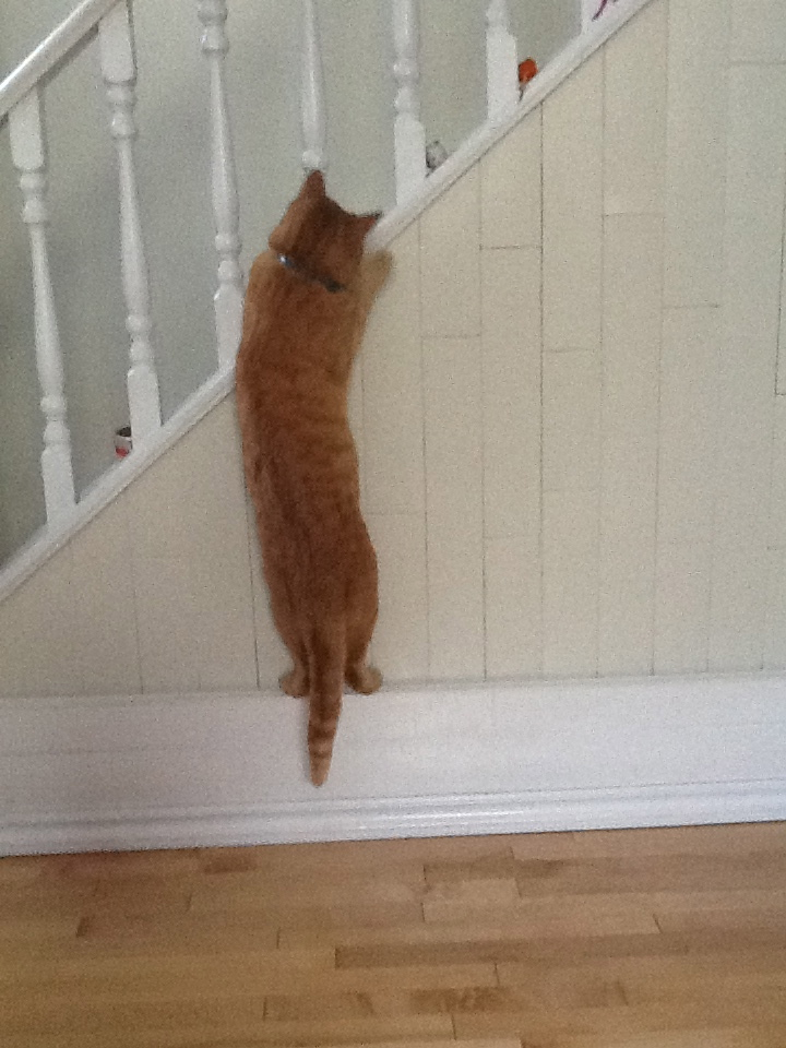 The cat attacking a toy mouse on the stairs