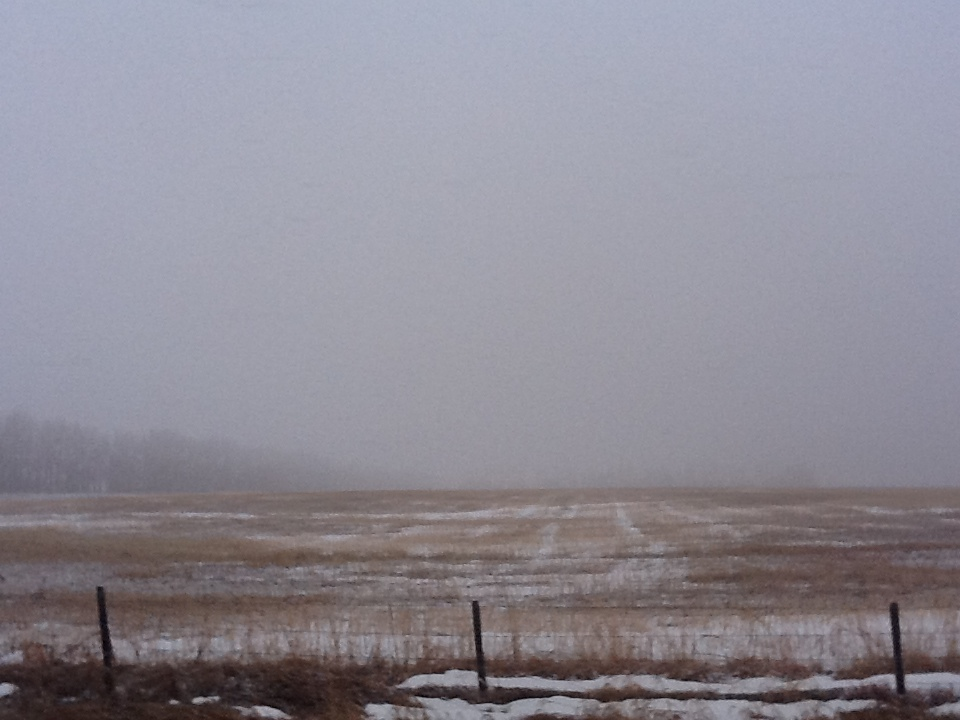 Foggy field with spring snow