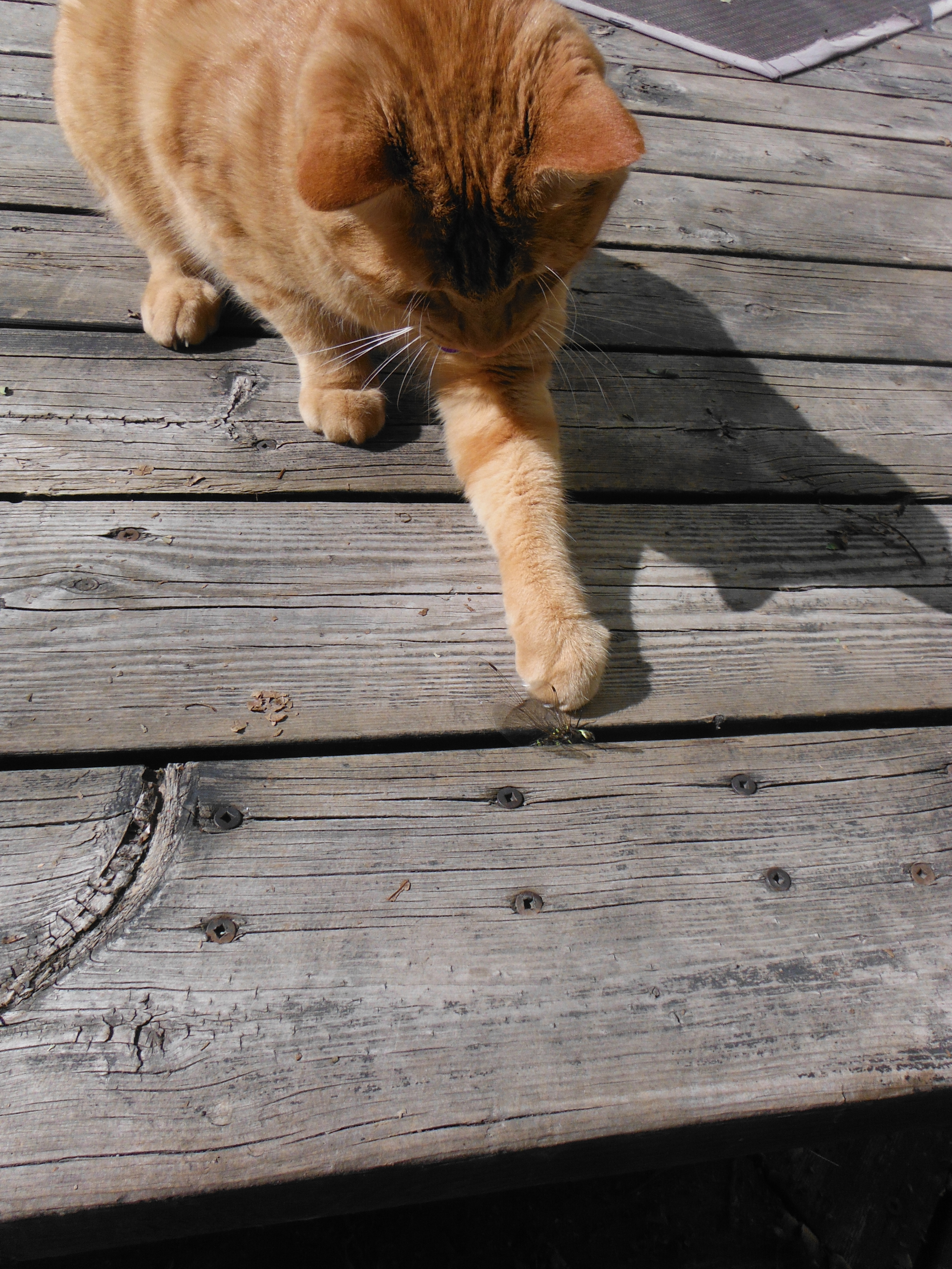 Gemstone Catches a Dragonfly