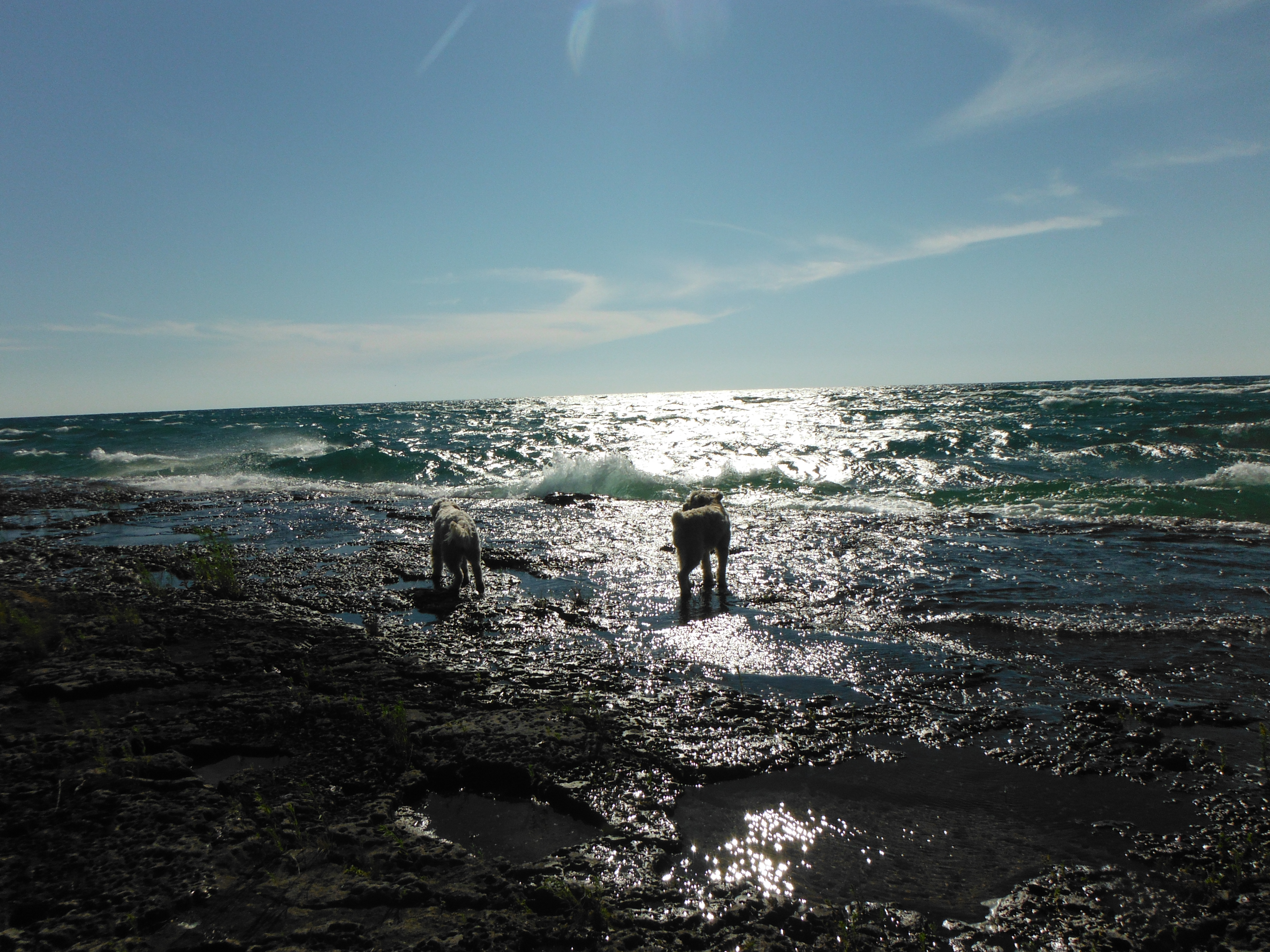 Lizzie and Max playing in the surf along Cape Hurd, Tobermory Ontario
