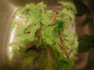 Washing the Lettuce the Rabbits Didn't Eat