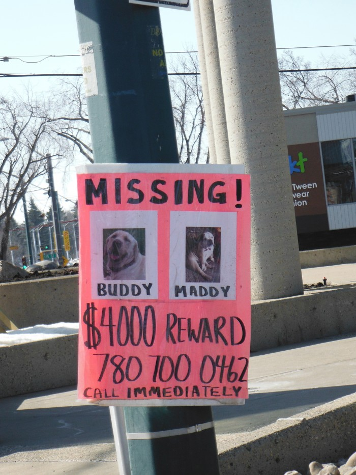 Missing Dogs Poster