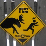 Moose Crossing on TCH