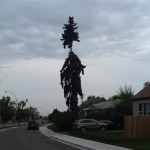The Dr Seus tree on Grout Road
