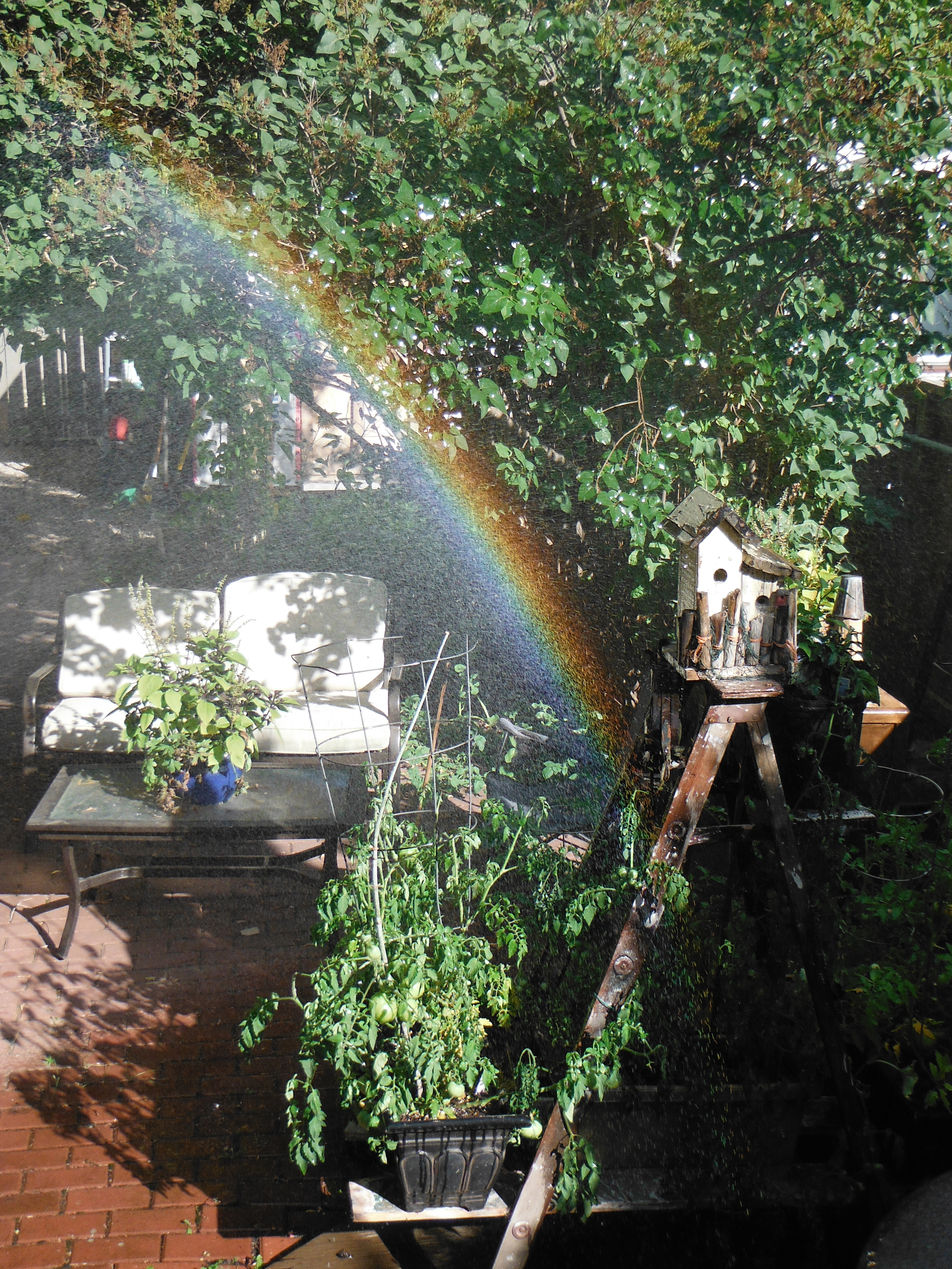 Rainbow while watering the tomato wall