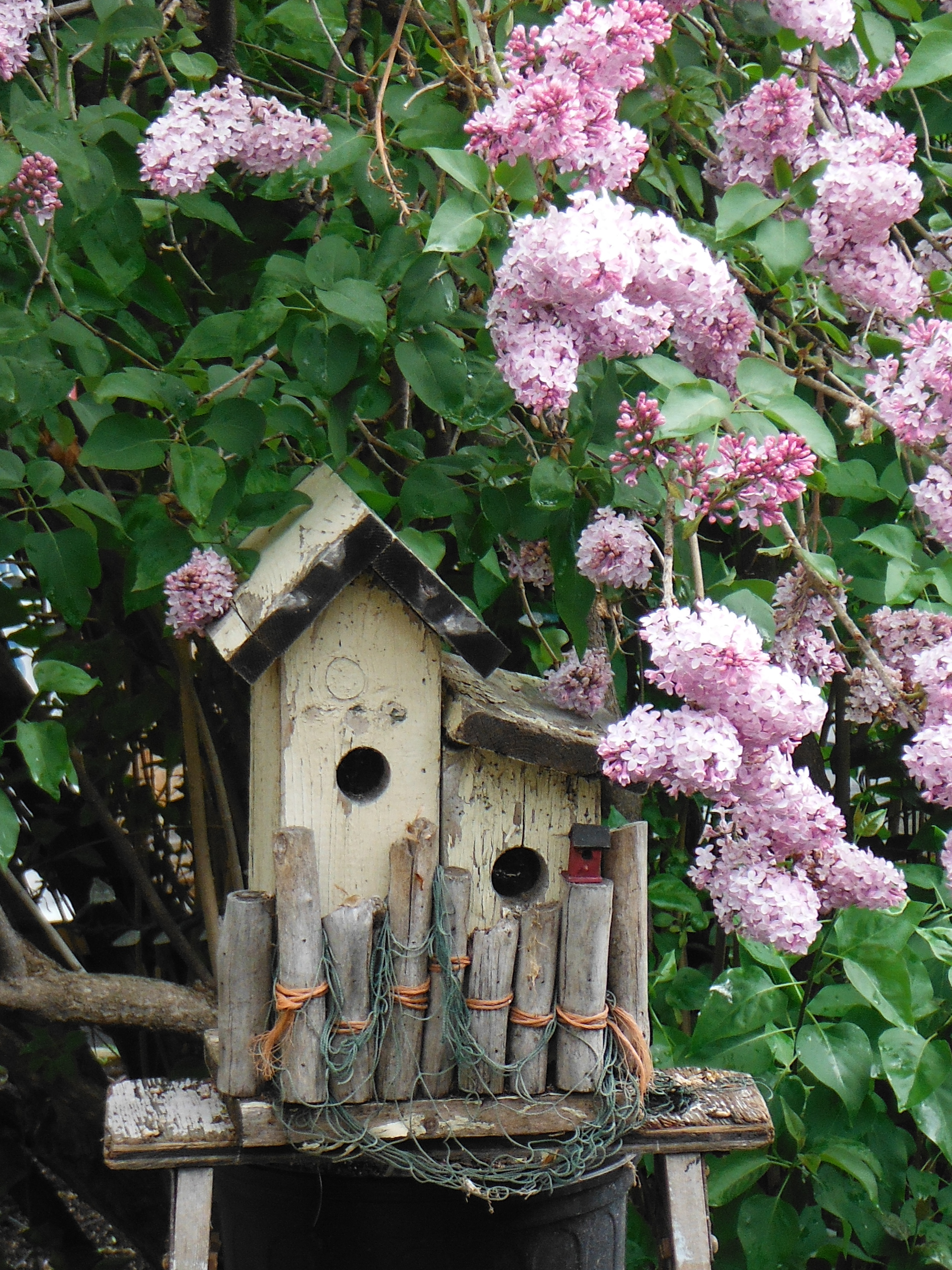 Lilacs surround the bird house