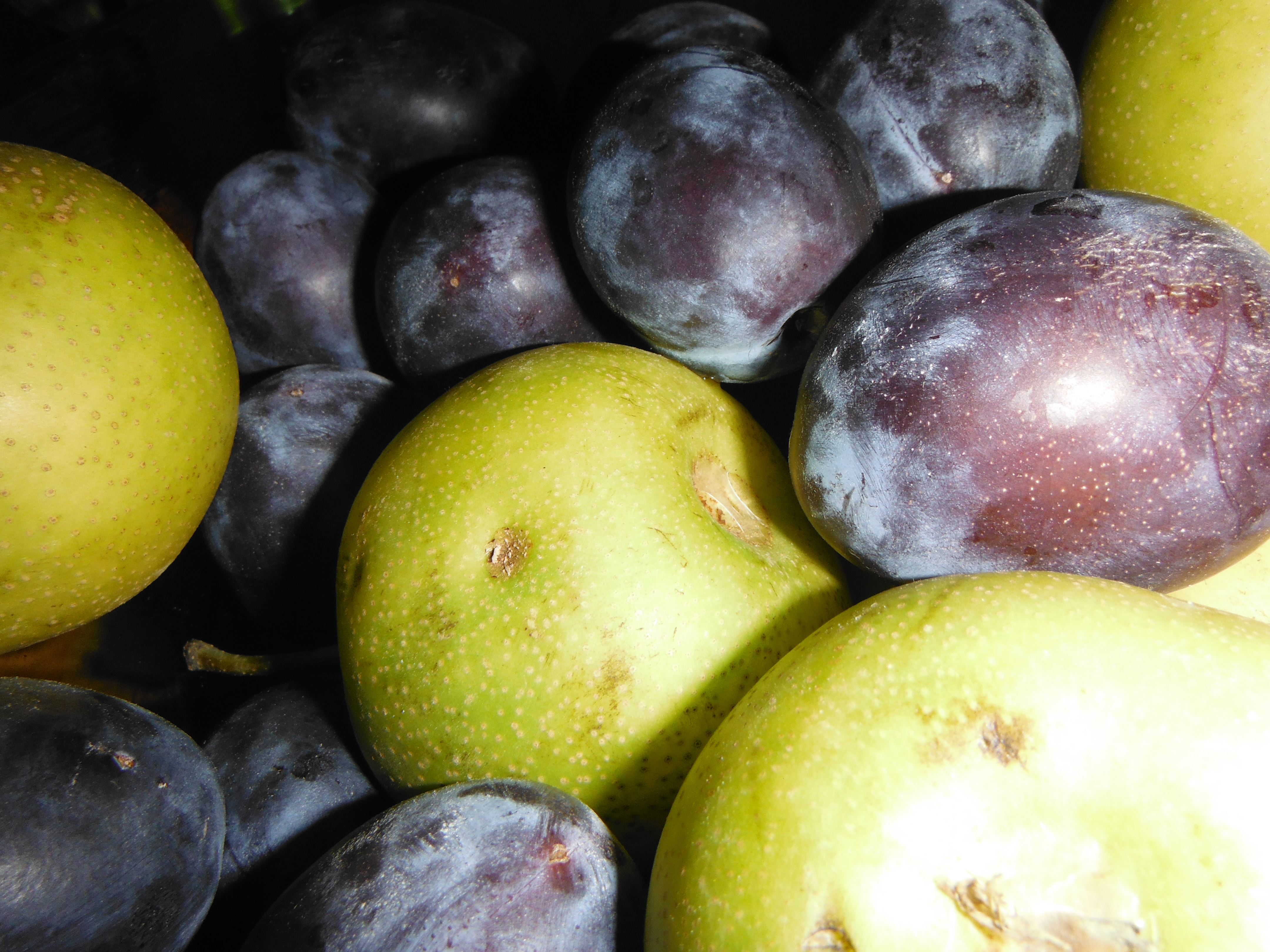 Plums and pear apples