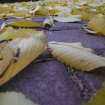 Leaves and paving stones