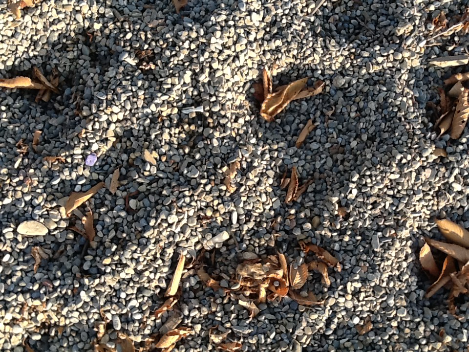 Gravel and leaves