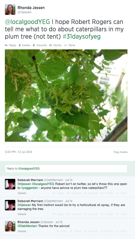 Conversation about the caterpillars in my plum tree