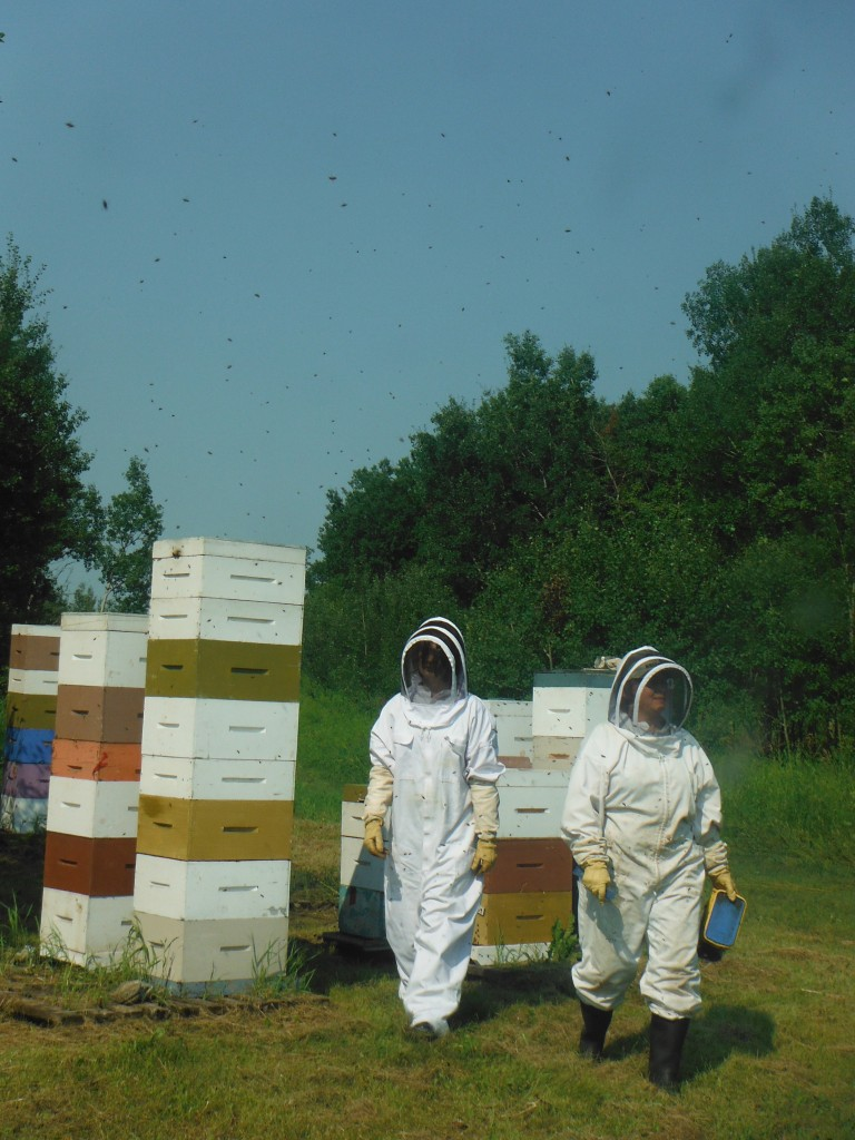 Leaving the hive surrounded by bees